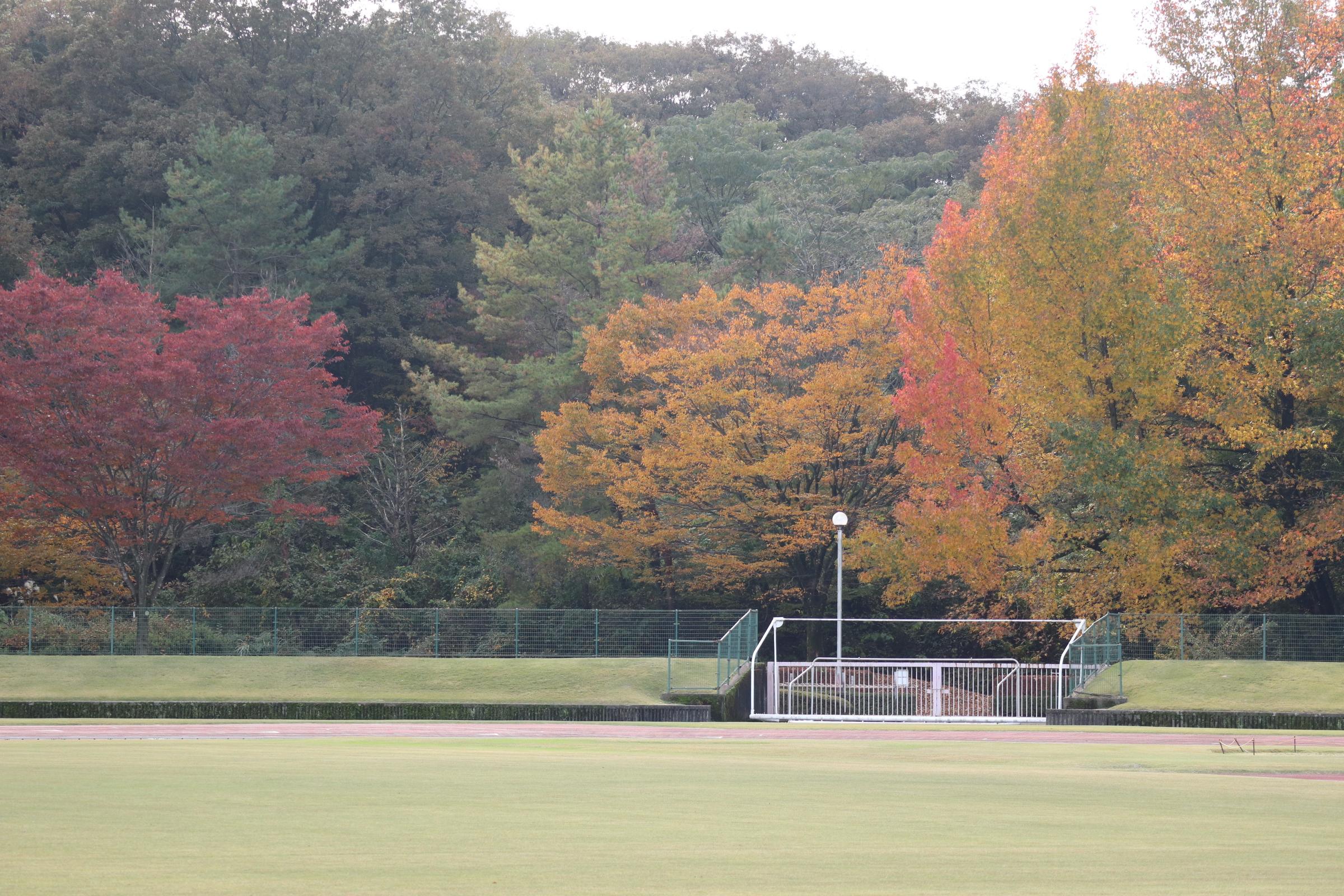 秋・・・色づく木々